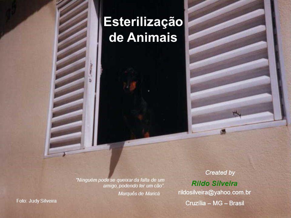 Esterilização de Animais