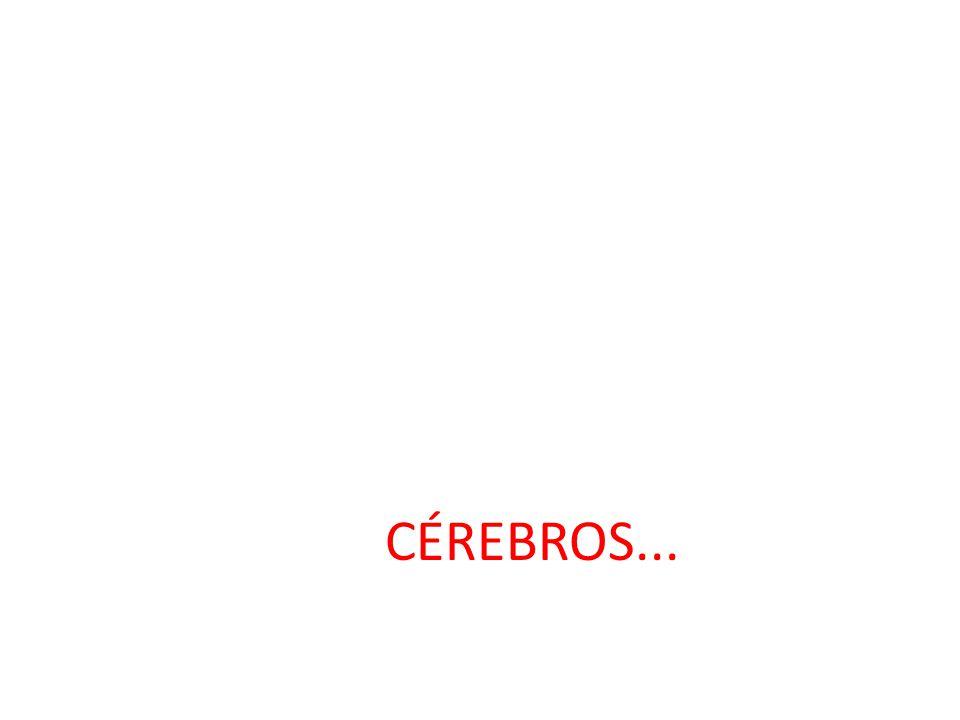 CÉREBROS...