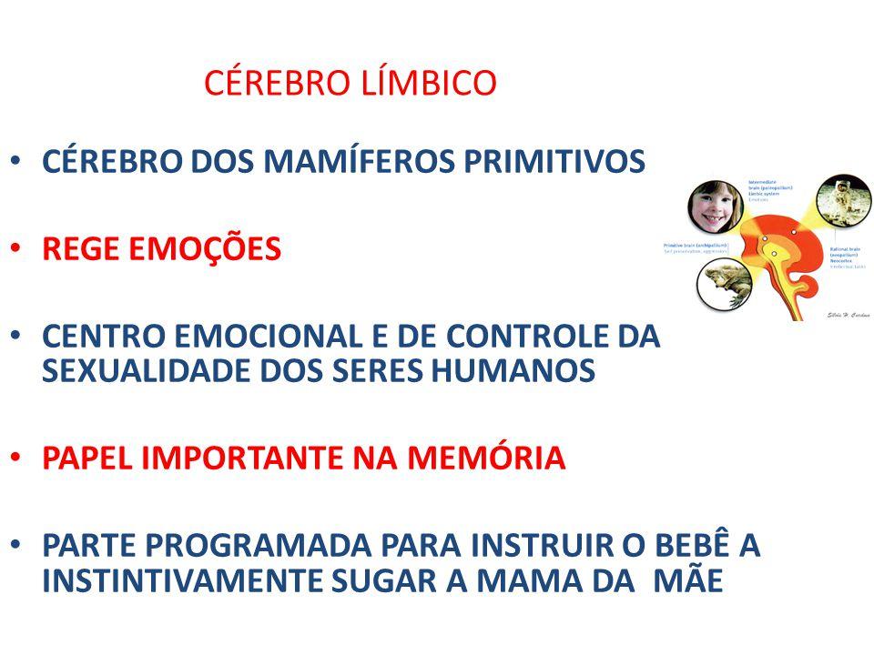 CÉREBRO LÍMBICO CÉREBRO DOS MAMÍFEROS PRIMITIVOS REGE EMOÇÕES