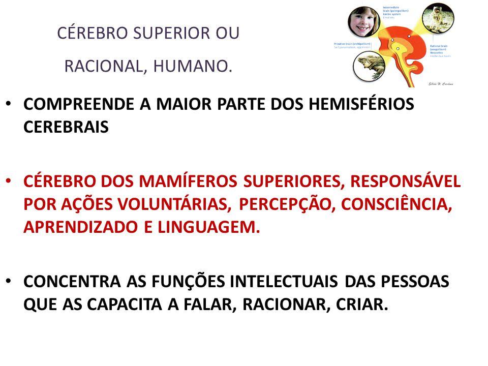 CÉREBRO SUPERIOR OU RACIONAL, HUMANO.