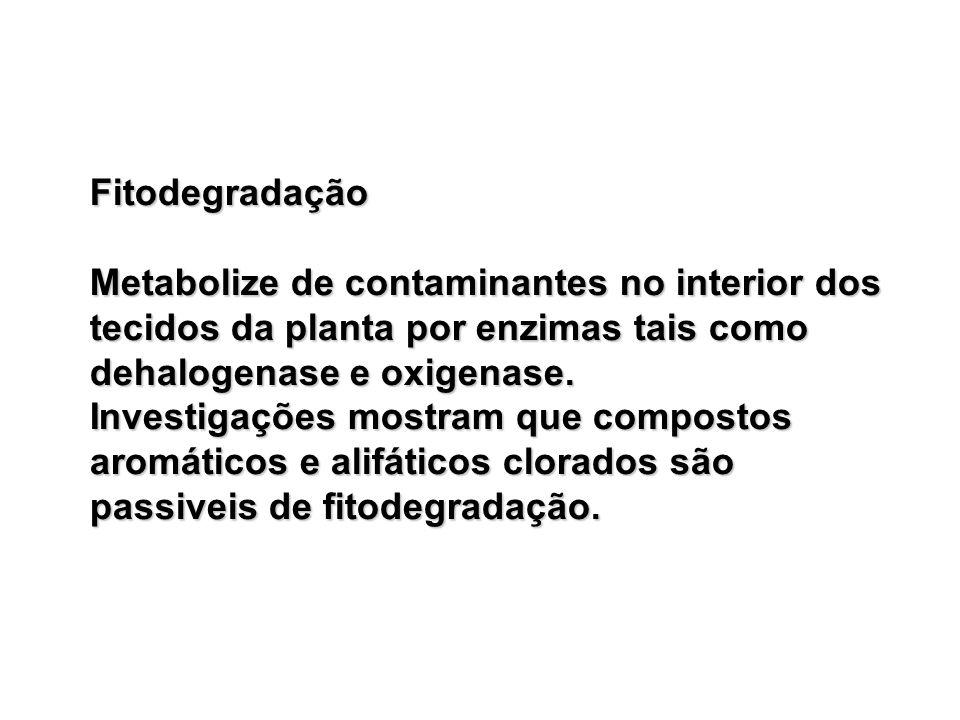 Fitodegradação Metabolize de contaminantes no interior dos tecidos da planta por enzimas tais como dehalogenase e oxigenase.