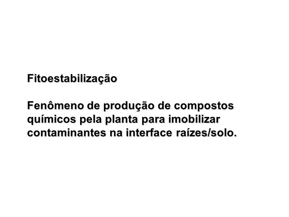 Fitoestabilização Fenômeno de produção de compostos químicos pela planta para imobilizar contaminantes na interface raízes/solo.