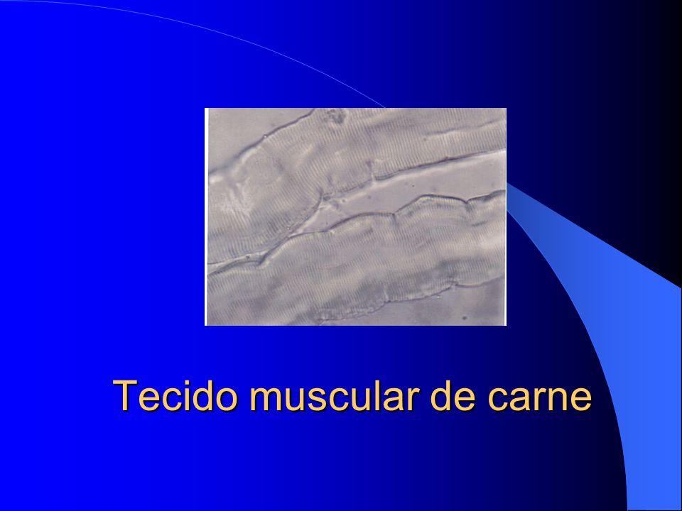 Tecido muscular de carne