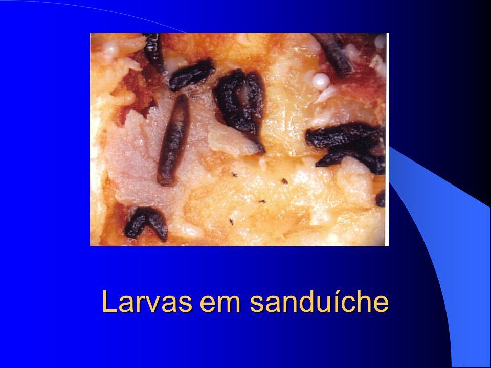 Larvas em sanduíche