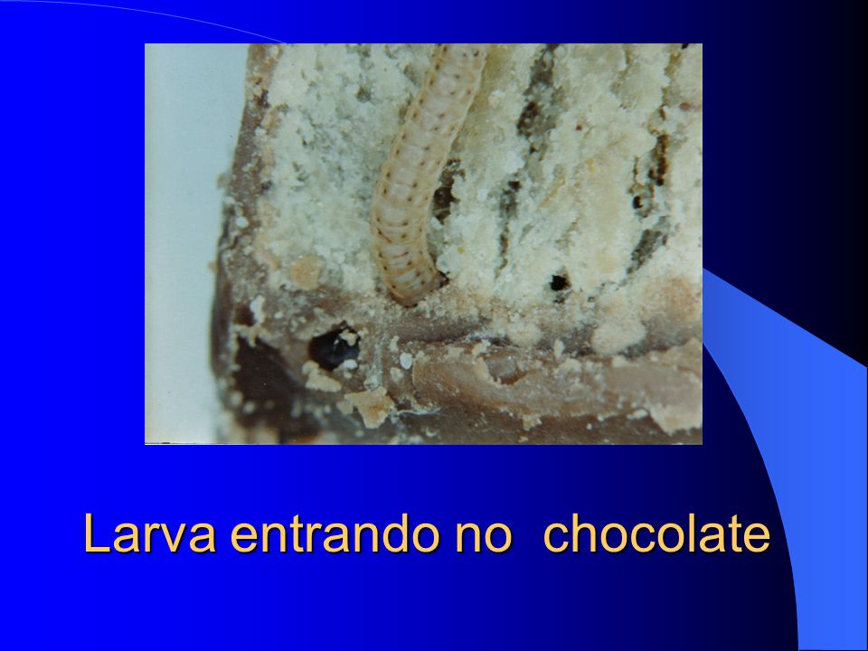 Larva entrando no chocolate