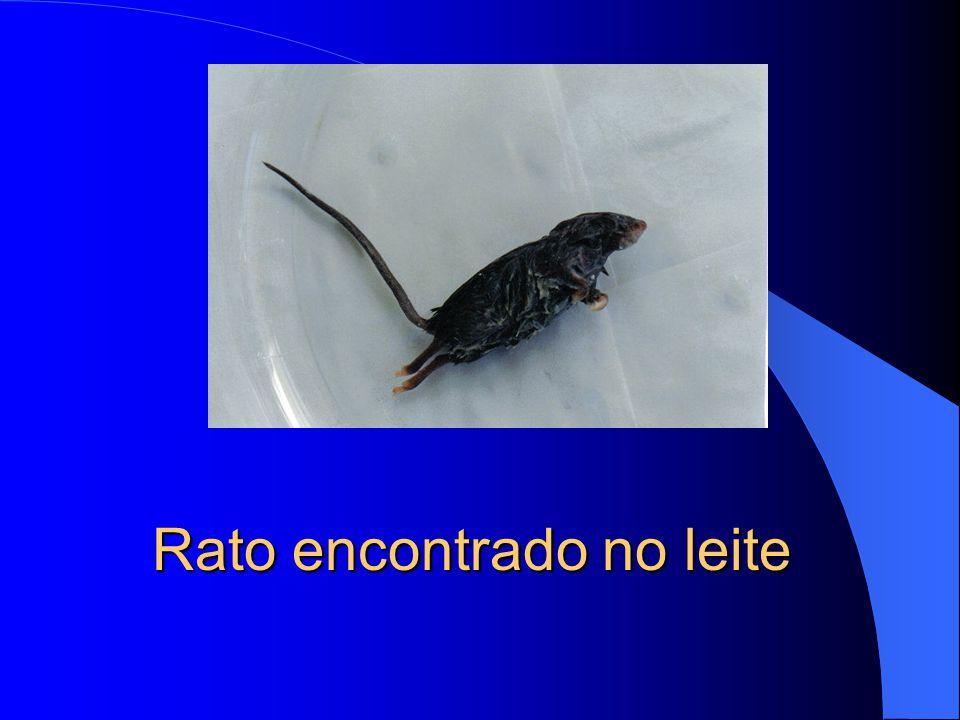 Rato encontrado no leite
