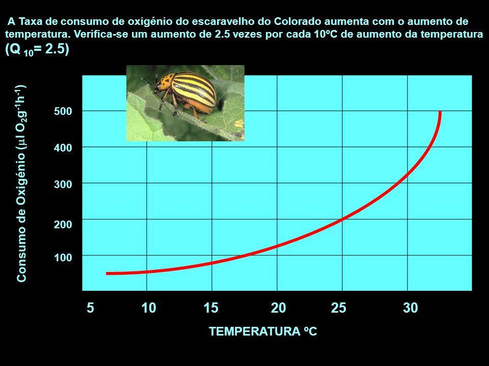 10 15 20 25 30 Consumo de Oxigénio (l O2g-1h-1) TEMPERATURA ºC