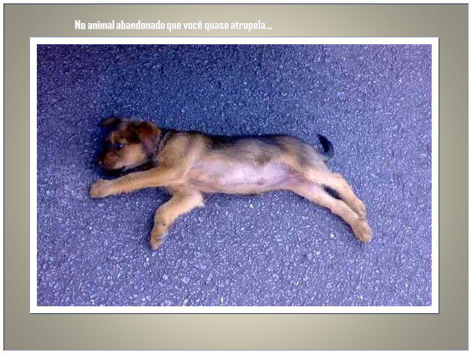 No animal abandonado que você quase atropela...