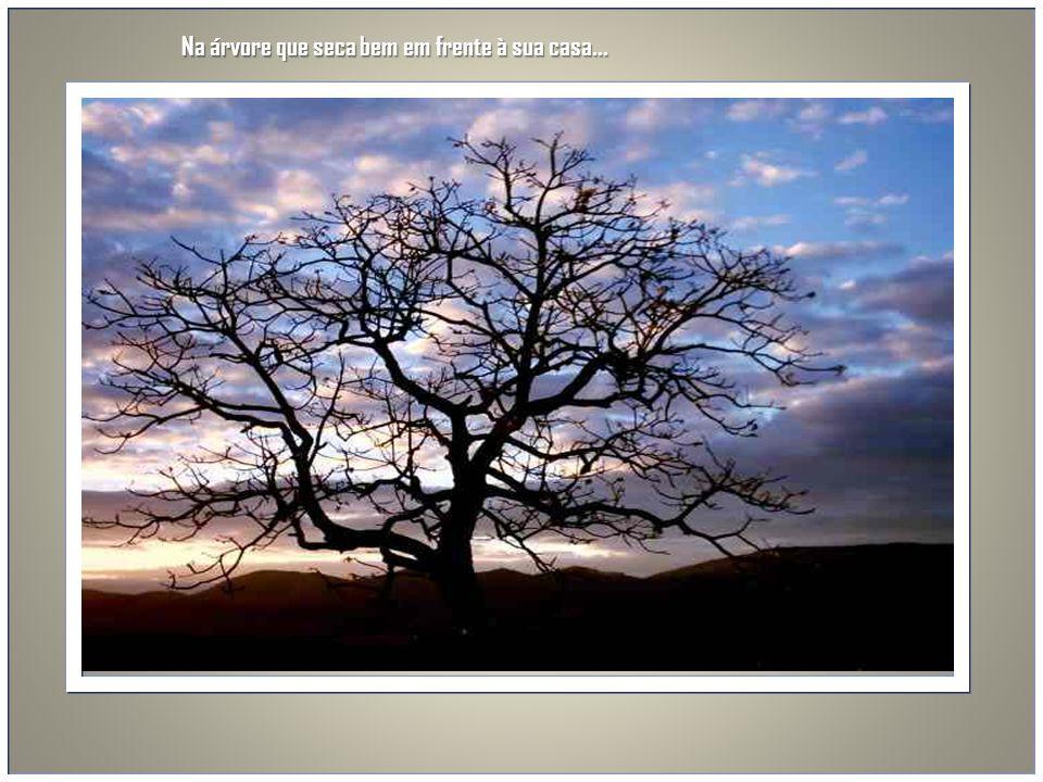 Na árvore que seca bem em frente à sua casa...