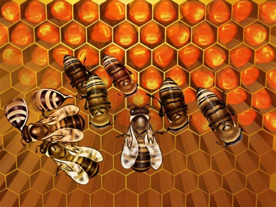 Nas cidades predominam as actividades não agrícolas (a apicultura não é uma actividade comum nas áreas urbanas).