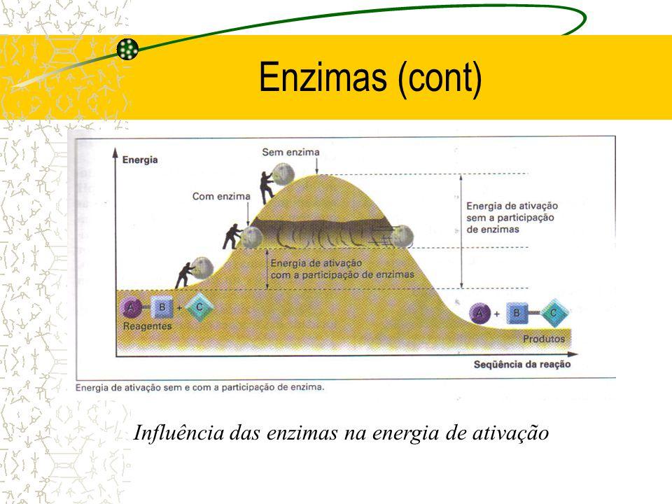Influência das enzimas na energia de ativação