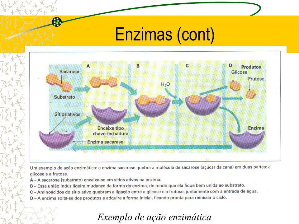 Exemplo de ação enzimática