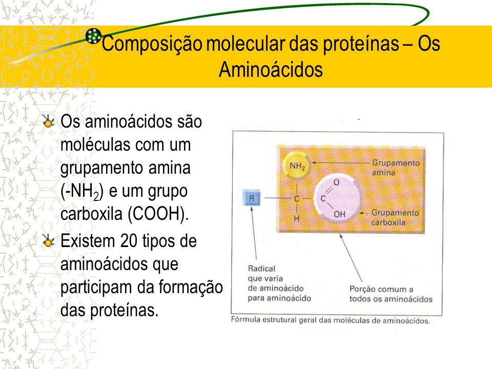 Composição molecular das proteínas – Os Aminoácidos