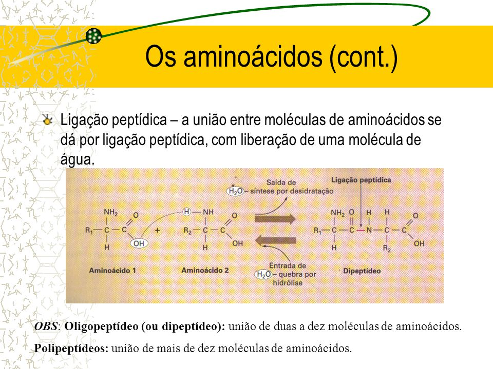 Os aminoácidos (cont.) Ligação peptídica – a união entre moléculas de aminoácidos se dá por ligação peptídica, com liberação de uma molécula de água.