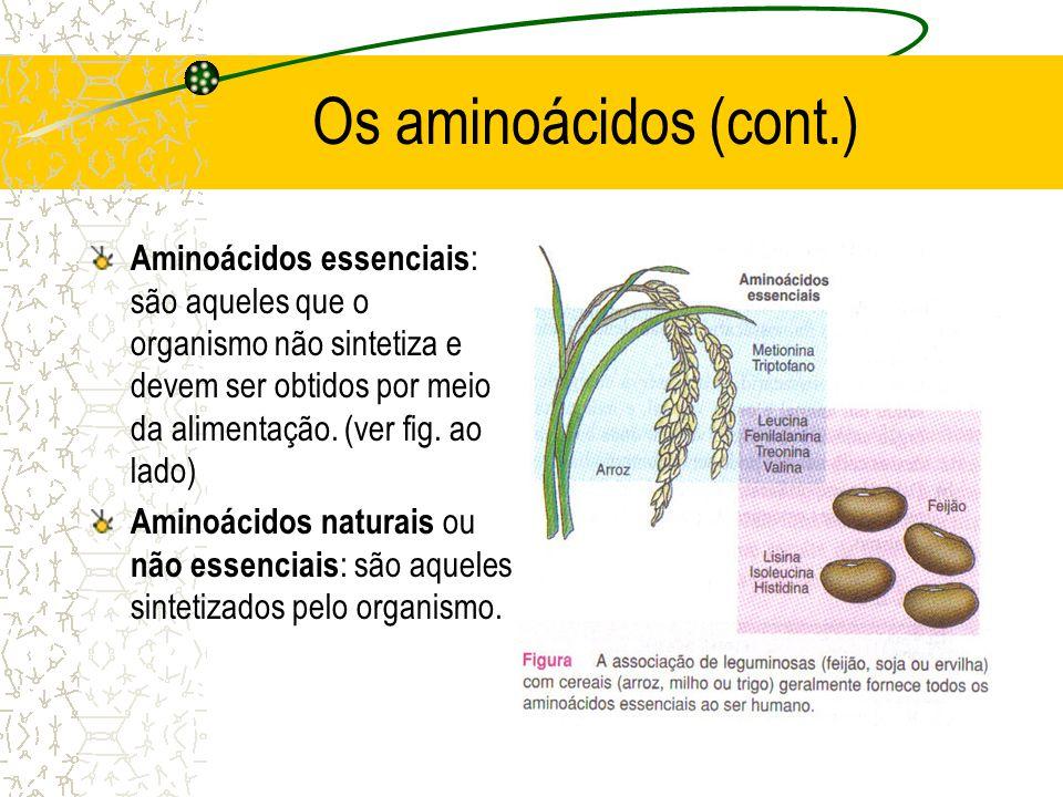 Os aminoácidos (cont.)