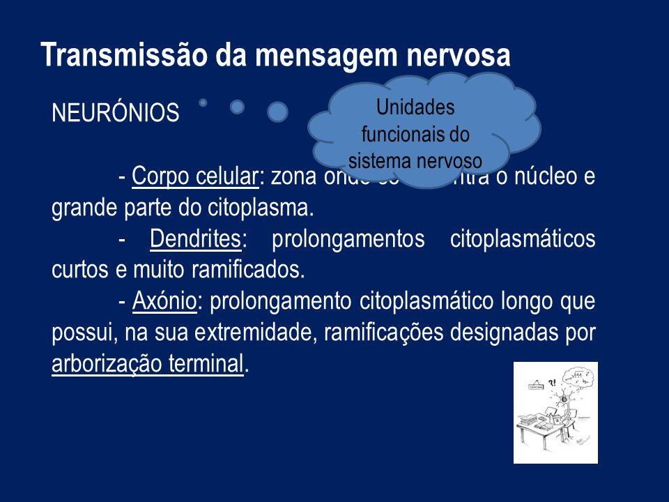 Unidades funcionais do sistema nervoso