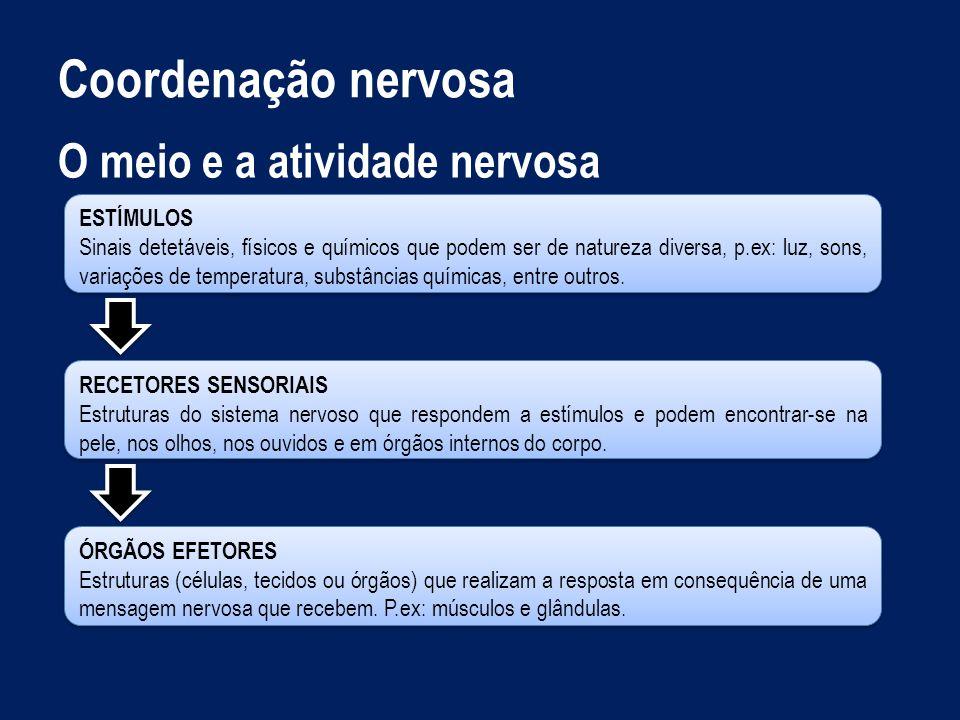 Coordenação nervosa O meio e a atividade nervosa ESTÍMULOS