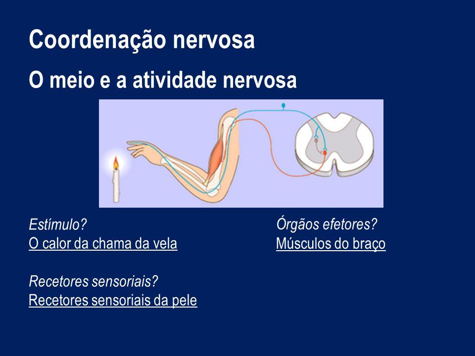 Coordenação nervosa O meio e a atividade nervosa Estímulo
