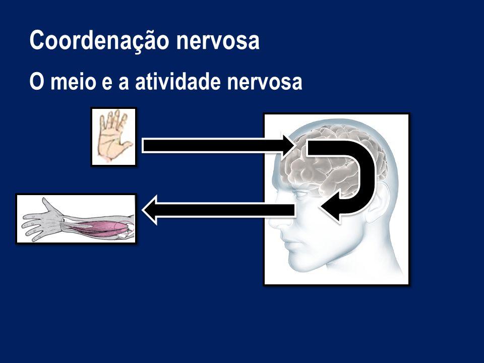 Coordenação nervosa O meio e a atividade nervosa