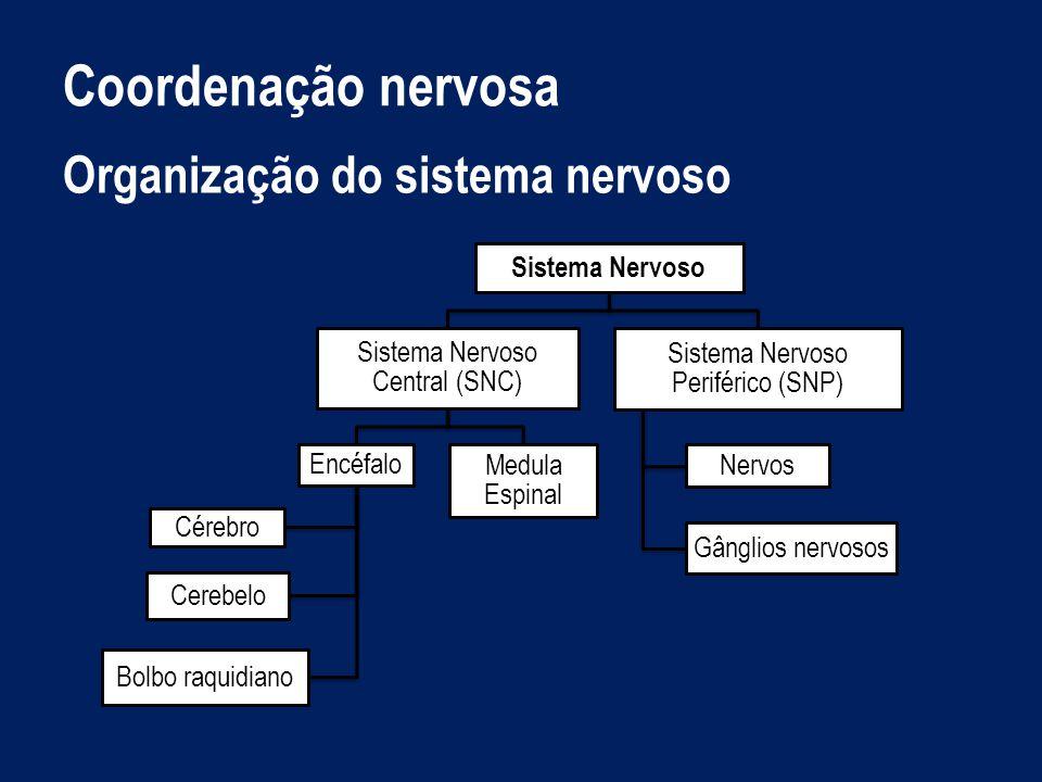 Coordenação nervosa Organização do sistema nervoso Sistema Nervoso