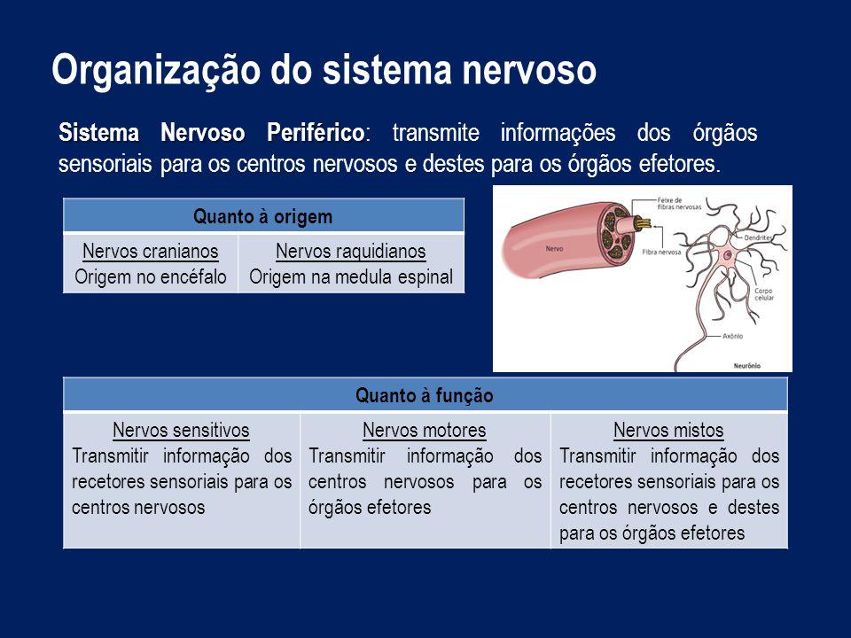 Origem na medula espinal
