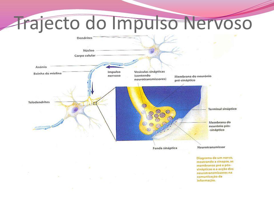 Trajecto do Impulso Nervoso
