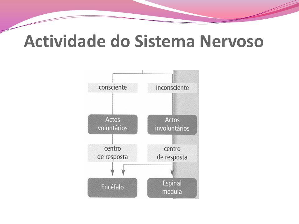 Actividade do Sistema Nervoso