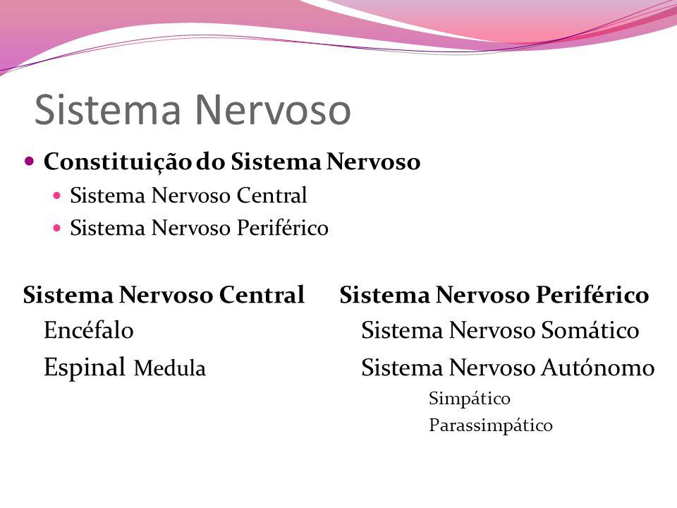 Sistema Nervoso Constituição do Sistema Nervoso