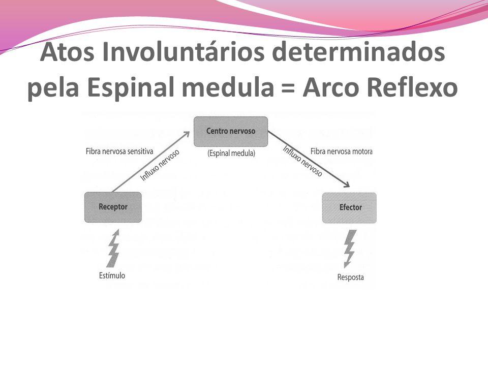 Atos Involuntários determinados pela Espinal medula = Arco Reflexo