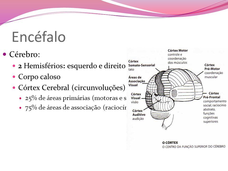 Encéfalo Cérebro: 2 Hemisférios: esquerdo e direito Corpo caloso
