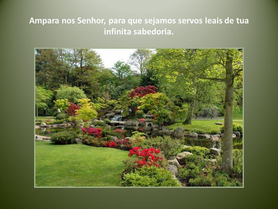 Ampara nos Senhor, para que sejamos servos leais de tua infinita sabedoria.