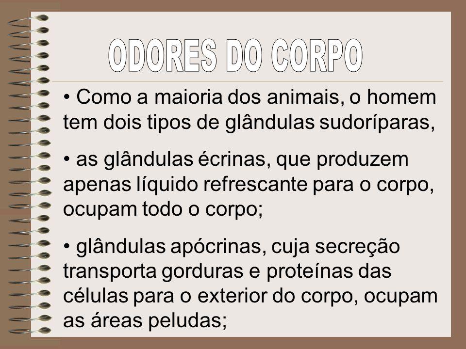 ODORES DO CORPO Como a maioria dos animais, o homem tem dois tipos de glândulas sudoríparas,