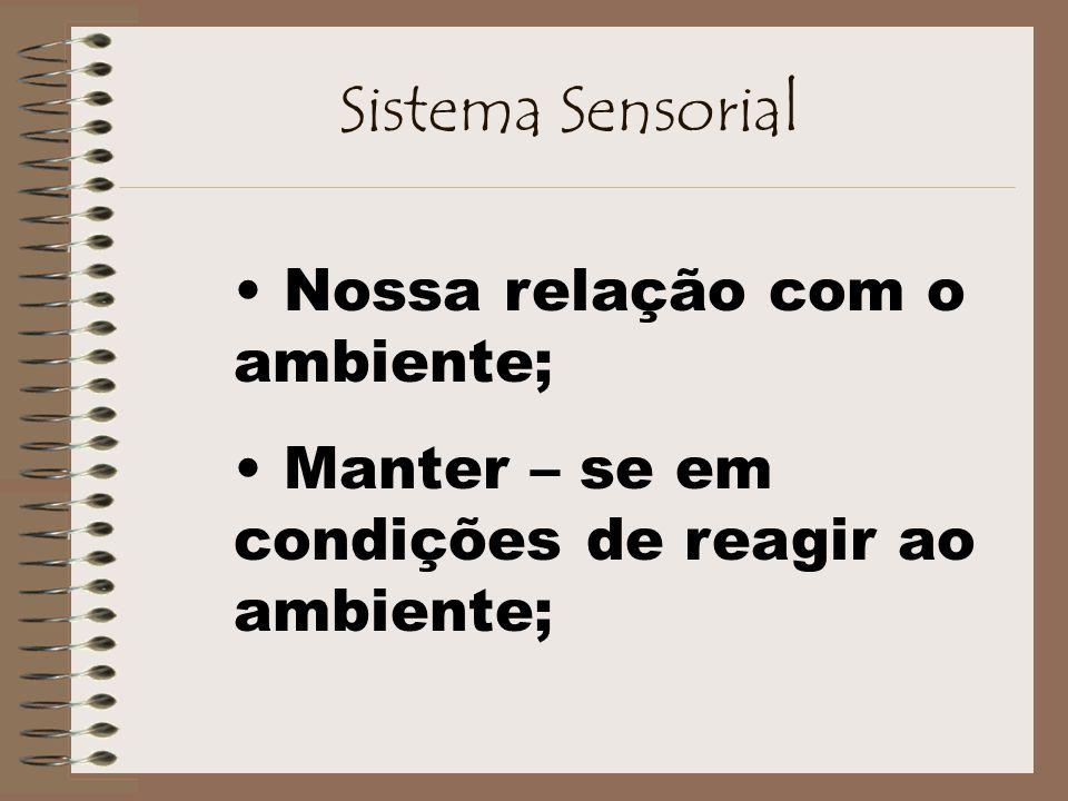 Sistema Sensorial Nossa relação com o ambiente;