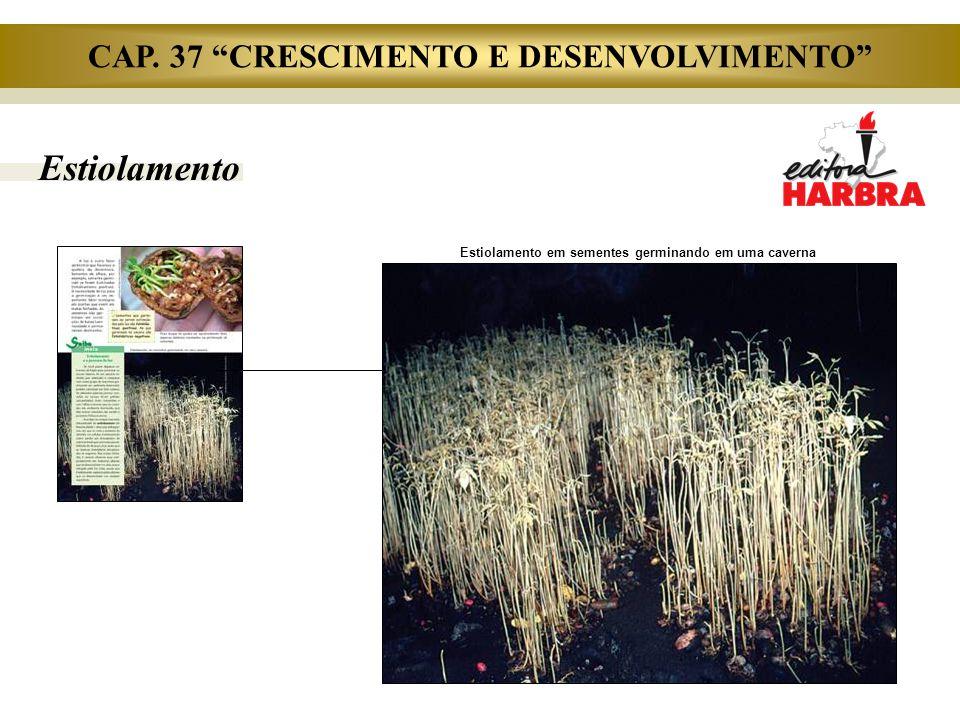 CAP. 37 CRESCIMENTO E DESENVOLVIMENTO