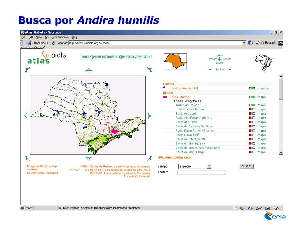 Busca por Andira humilis