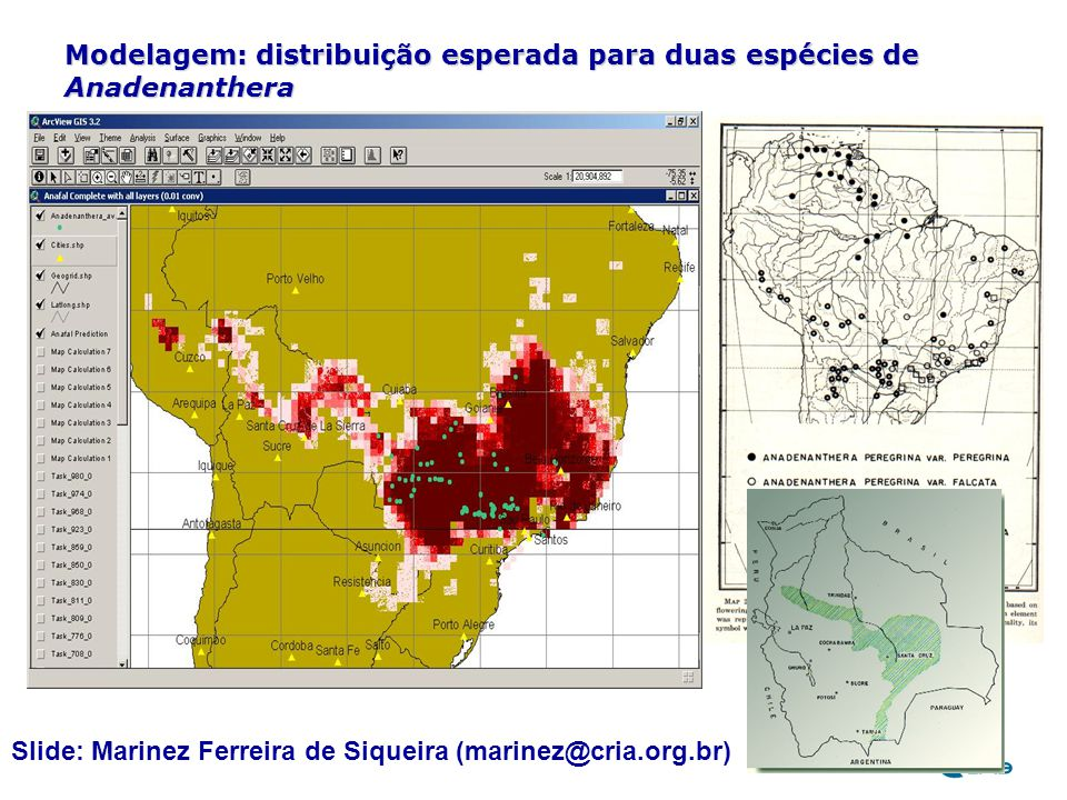 Modelagem: distribuição esperada para duas espécies de Anadenanthera
