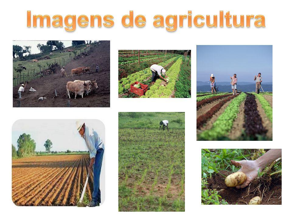 Imagens de agricultura