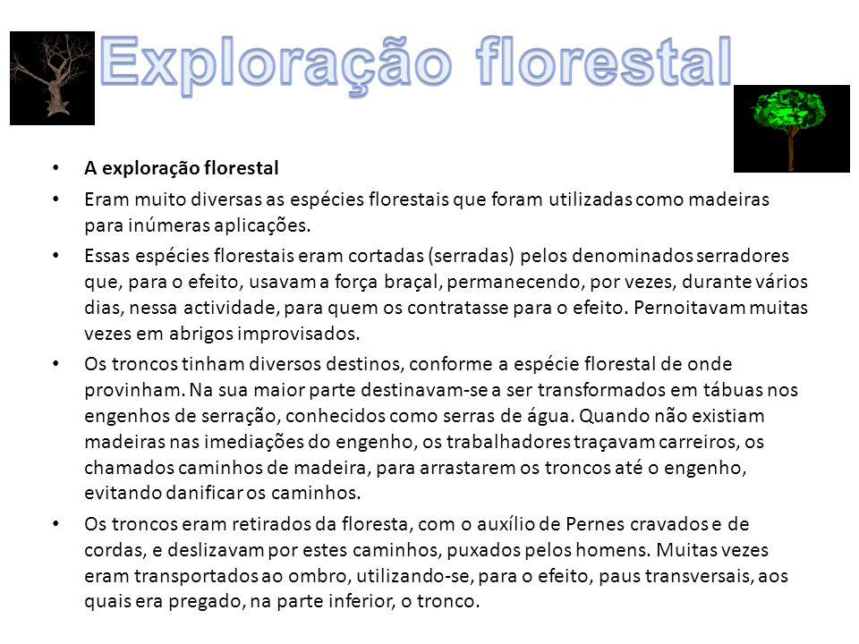 Exploração florestal A exploração florestal