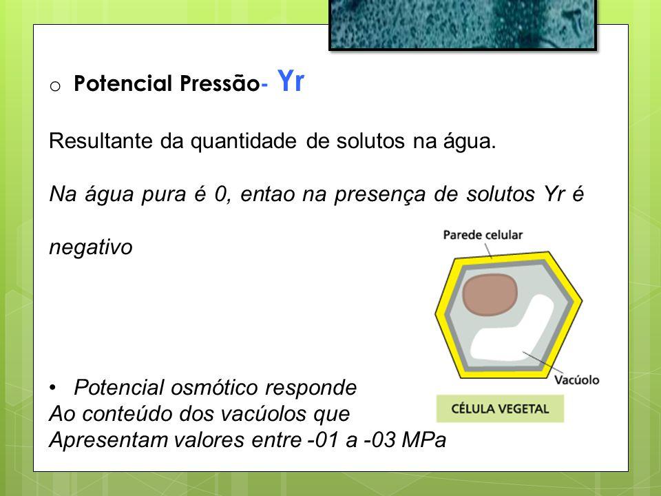 Potencial Pressão- Yr Resultante da quantidade de solutos na água. Na água pura é 0, entao na presença de solutos Yr é negativo.