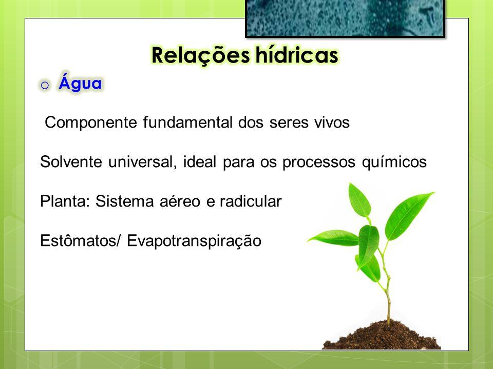 Relações hídricas Água Componente fundamental dos seres vivos