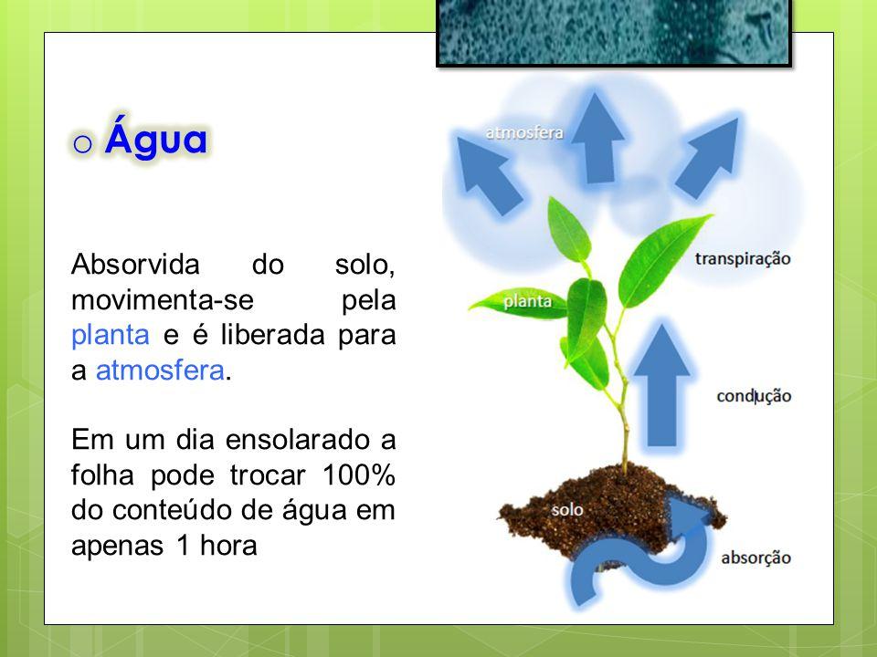 Água Absorvida do solo, movimenta-se pela planta e é liberada para a atmosfera.