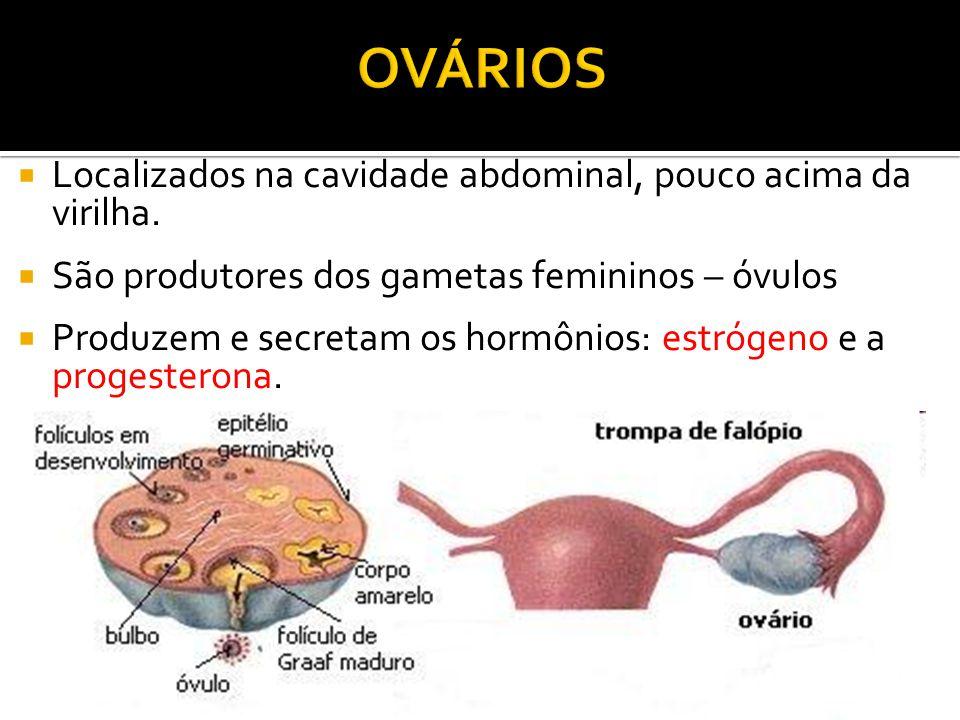 OVÁRIOS Localizados na cavidade abdominal, pouco acima da virilha.