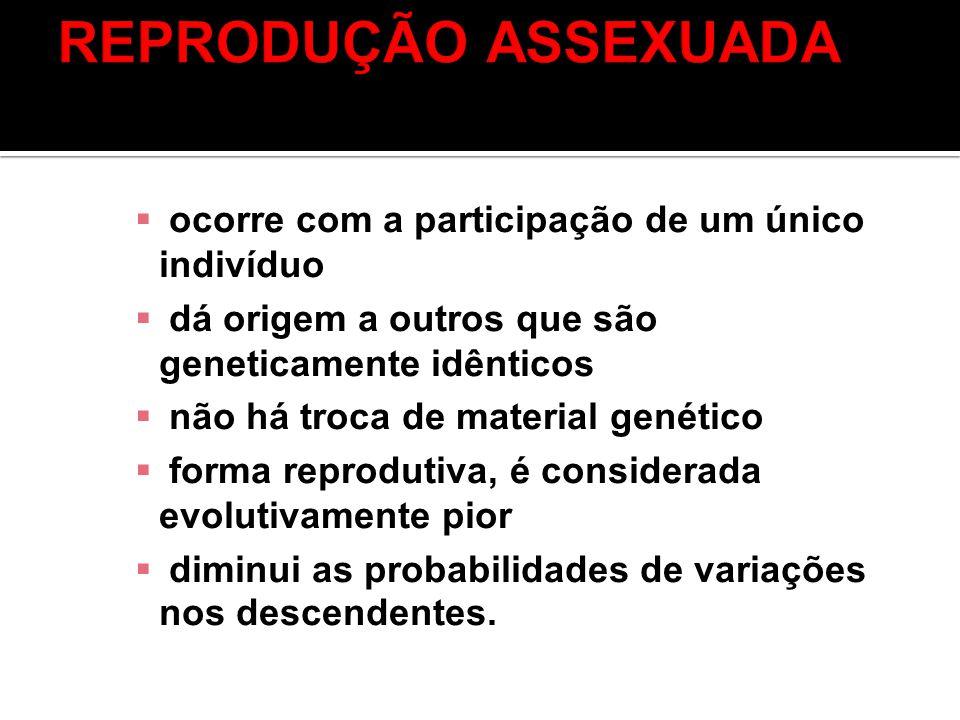 REPRODUÇÃO ASSEXUADA ocorre com a participação de um único indivíduo