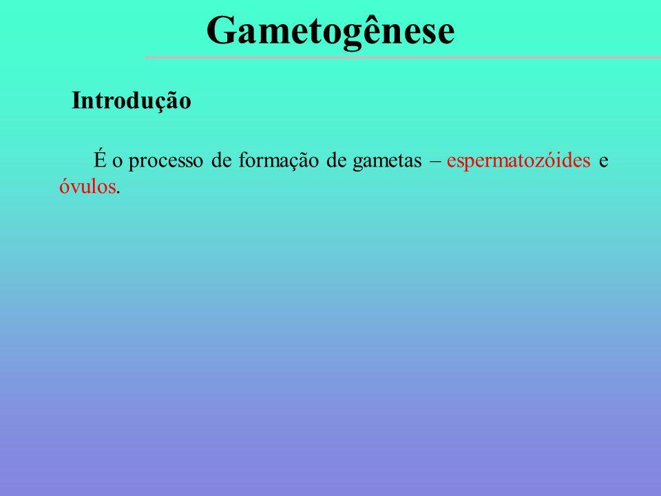 Gametogênese Introdução