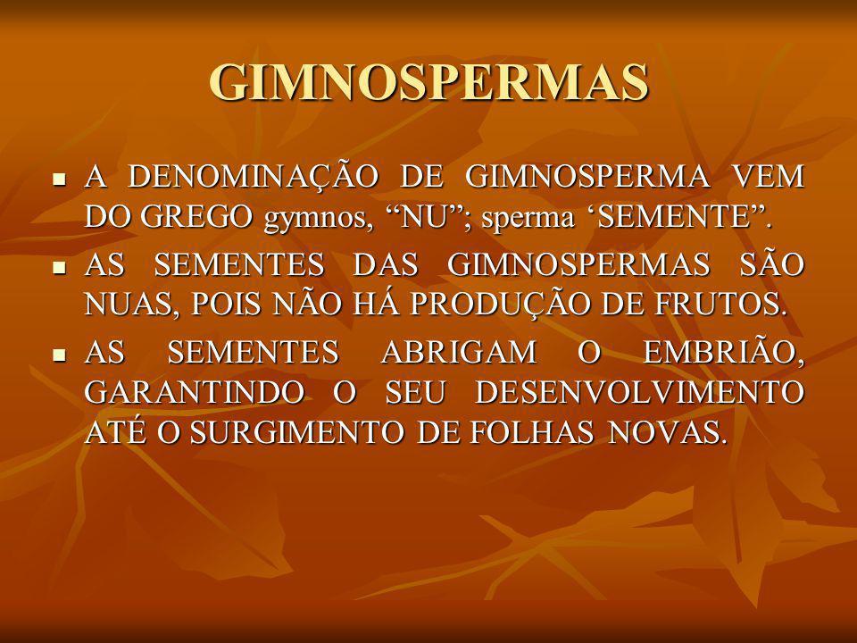 GIMNOSPERMAS A DENOMINAÇÃO DE GIMNOSPERMA VEM DO GREGO gymnos, NU ; sperma 'SEMENTE .