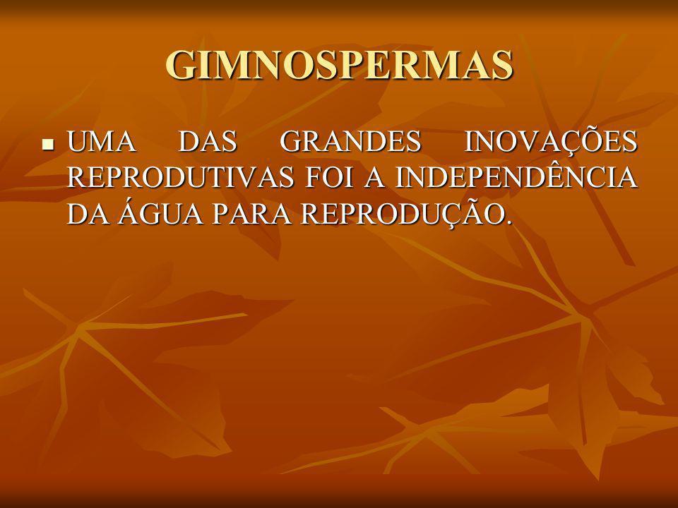 GIMNOSPERMAS UMA DAS GRANDES INOVAÇÕES REPRODUTIVAS FOI A INDEPENDÊNCIA DA ÁGUA PARA REPRODUÇÃO.