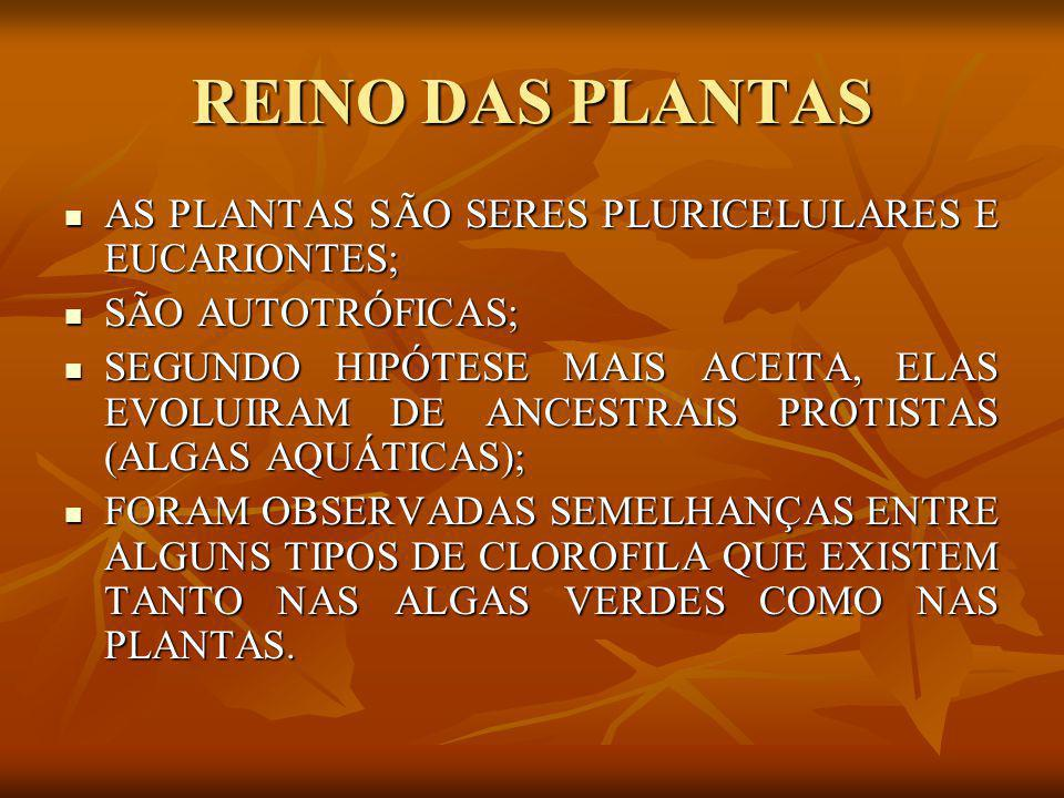 REINO DAS PLANTAS AS PLANTAS SÃO SERES PLURICELULARES E EUCARIONTES;