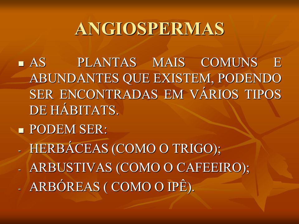 ANGIOSPERMAS AS PLANTAS MAIS COMUNS E ABUNDANTES QUE EXISTEM, PODENDO SER ENCONTRADAS EM VÁRIOS TIPOS DE HÁBITATS.