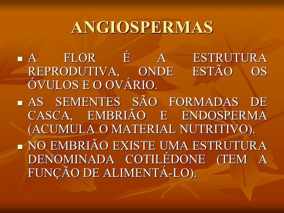 ANGIOSPERMAS A FLOR É A ESTRUTURA REPRODUTIVA, ONDE ESTÃO OS ÓVULOS E O OVÁRIO.