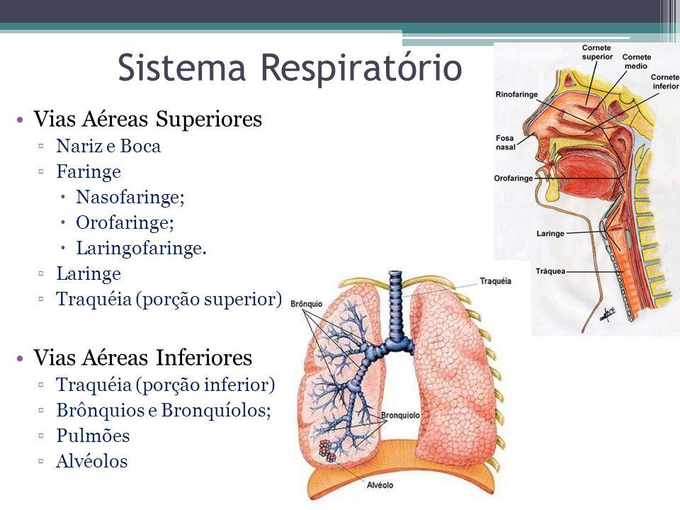 Sistema Respiratório Vias Aéreas Superiores Vias Aéreas Inferiores